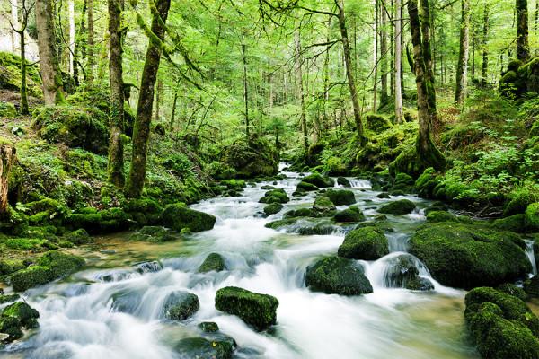przyjazny-dla-srodowiska-las